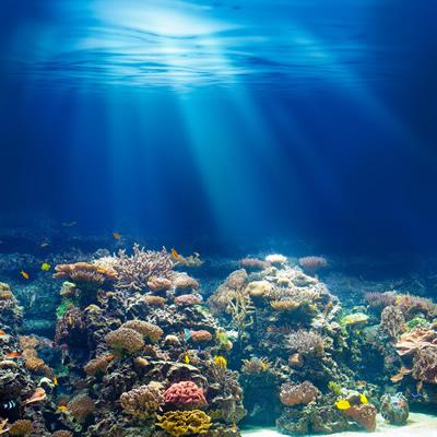 海の中の不思議な風景